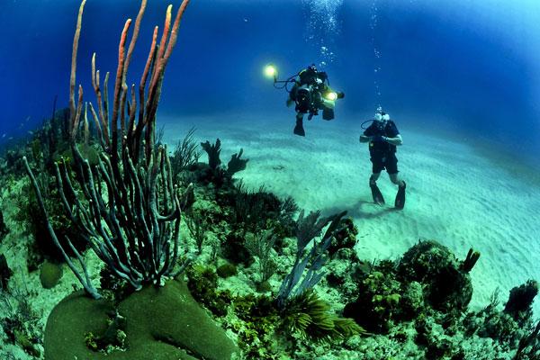 PADI Open water diver 3