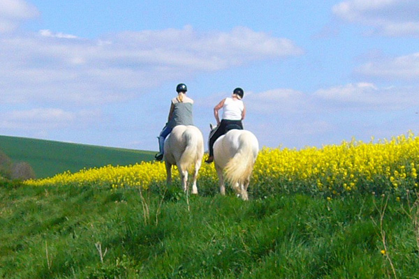 Paseos a caballo 2