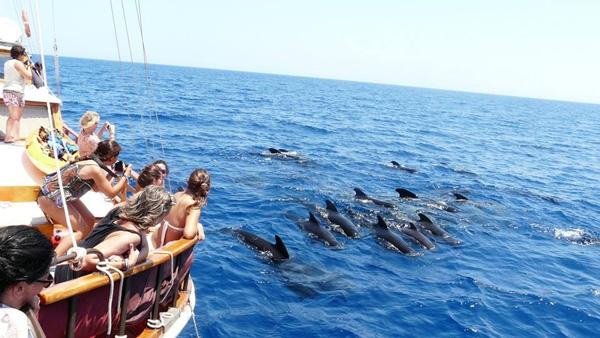 Avistamiento de cetáceos Alicante. puraventuraspain.com