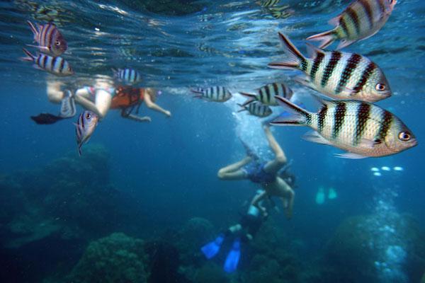 Snorkel Tabarca. puraventuraspain.com